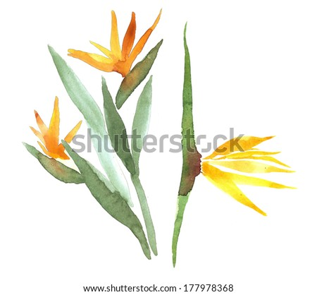 Tropical flowers watercolor illustration - stock photo