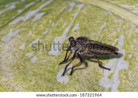 tropical fly mosquito on a leaf - stock photo