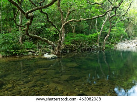 Tropical Forest and lake