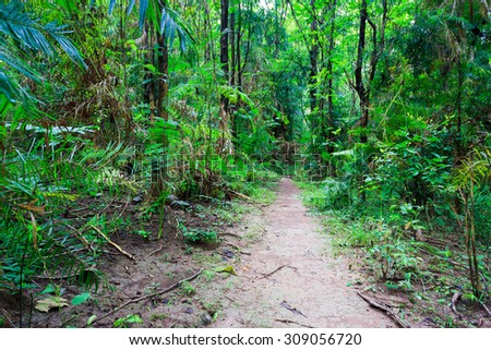 Tropical forest hiking path from Thailand national park - stock photo
