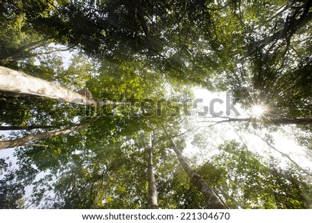 Tropical forest in Chiang Mai, Thailand - stock photo