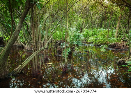 Tropical forest landscape with mangrove trees growing in the water
