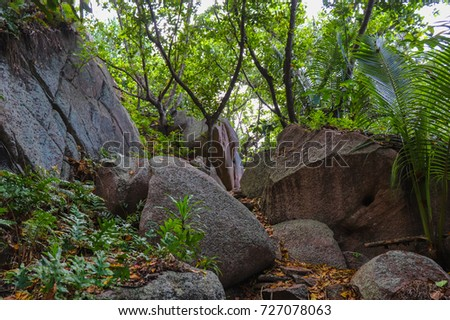 Tropical forest of Seychelles. Jungle of La Digue island. Eastern Africa
