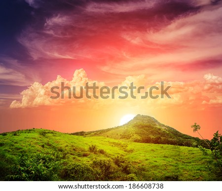 Tropical forest, palm trees in sunlight. Sunset landscape in Dominican Republic. Nature of caribbean island