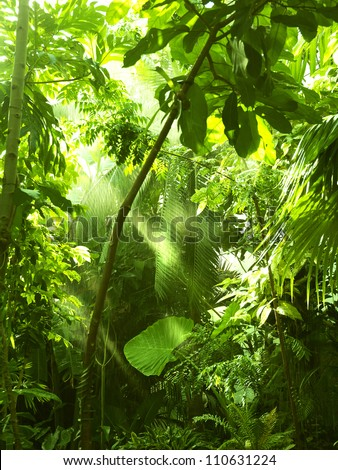 Tropical forest, trees in sunlight and rain - stock photo