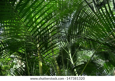 Tropical forest with palm plants                  - stock photo