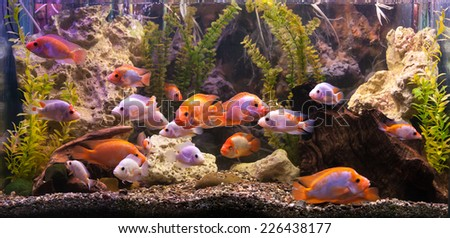Fish tank stock images royalty free images vectors for Big freshwater aquarium fish