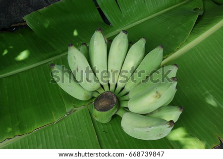 tropical fruit,green banana in Thailand on banana leaves