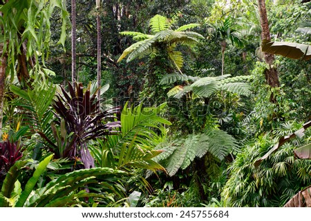 Tropical Garden, Cairns, Queensland, Australia - stock photo
