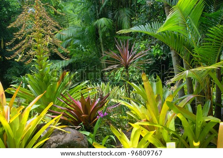 Tropical Garden in Cairns, North Queensland, Australia - stock photo