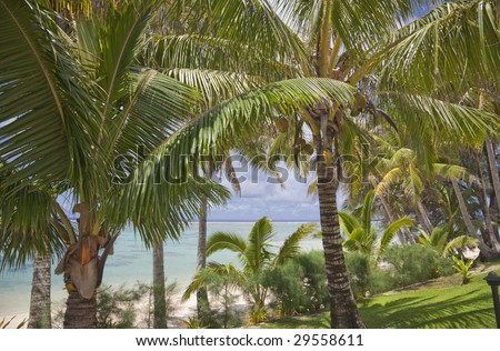 Tropical Garden on Beach - Rarotonga, Cook Islands, Polynesia