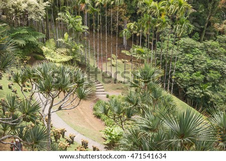 Tropical garden on the island of Martinique