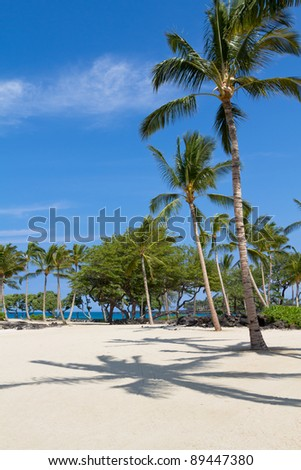 Tropical getaway on the beach with sand, sun and palm trees - stock photo