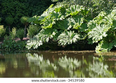 tropical giant leaves reflecting on lake shore - stock photo