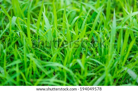 Tropical green grass background - stock photo