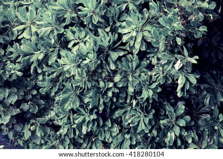 tropical green leafs with rain drops - stock photo