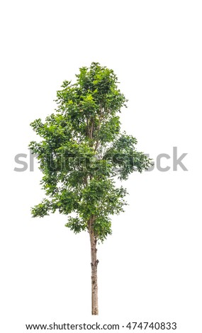 Tropical green tree isolated on white background.