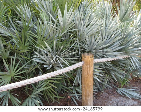 Tropical growth behind rope fencing.