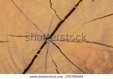 Tropical hardwood and textured background / Abstract background / Mankind most valuable and sustainable resources - stock photo