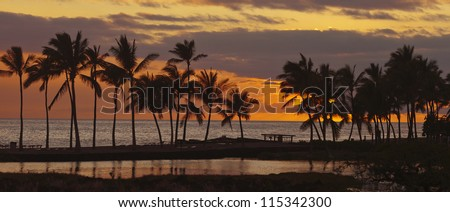 Tropical Hawaiian beach in sunset with coconut palm trees, panoramic view - stock photo