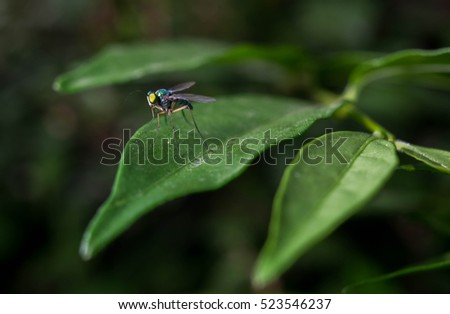 Tropical insects, Tropical insects near term, Tropical insects blurred.
