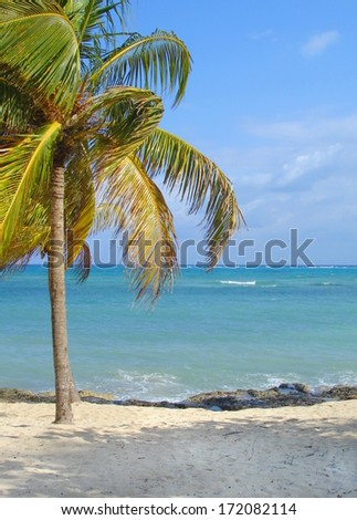 Tropical island in the sun with a white sand beach and palmtrees by the shore feels like paradise  - stock photo