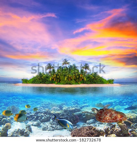 Tropical island of Maldives with marine life - stock photo