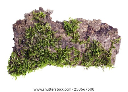 Tropical island top view isolated concept. On a piece of bark of a tree the green moss grows  macro. - stock photo