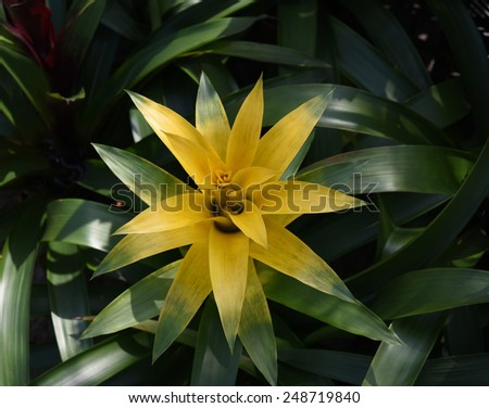 Tropical islands, rainforests, pineapple flower - stock photo