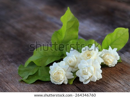 Tropical jasmine flower on wood.Jasmine flowers and leaves on brown wooden board.  - stock photo