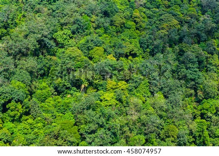 Tropical jungle aerial shot 26