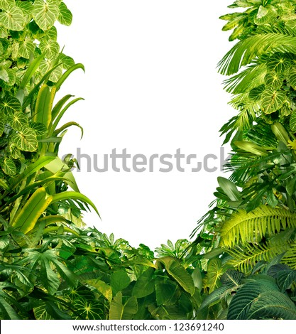 Tropical jungle as a blank frame with rich green plants as ferns and palm tree leaves found in southern hot climates as south America  Hawaii and Asia with a white isolated copy space center. - stock photo