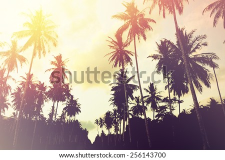 Tropical jungle background with palm tree silhouettes at sunset. Vintage effect. - stock photo