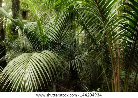 Tropical jungle forest. Natural background - stock photo