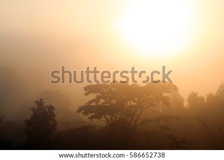 Tropical jungle in in the morning mist during sunrise, Thailand