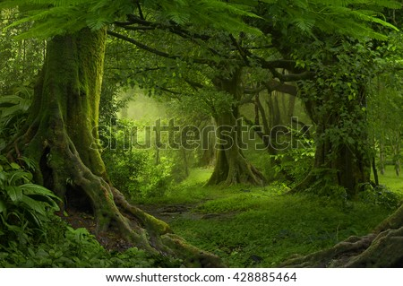 Tropical jungle in Southeast Asia - stock photo