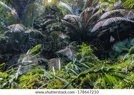 tropical jungles of South East Asia. Thailand - stock photo
