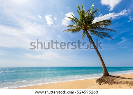 Tropical landscape, the inclined palm tree on the seashore