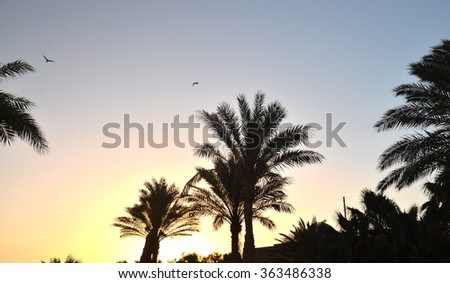 Tropical landscape with palm trees silhouettes and birds flying at sunrise. African sunrises and sunsets