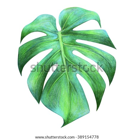 Tropical leaf drawing - stock photo