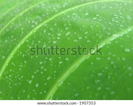 Tropical leaf in the rain forrest