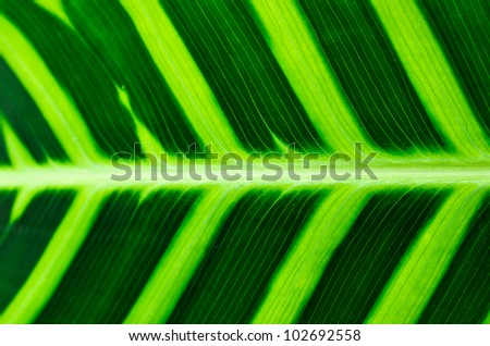 Tropical Leaf Pattern - stock photo