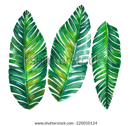tropical leaves. Banana palm leaves illustration in watercolor. - stock photo