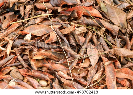 Tropical leaves on ground