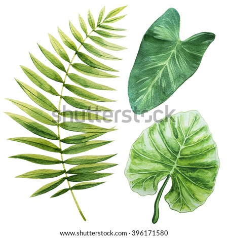 Tropical leaves. Watercolor illustration. - stock photo