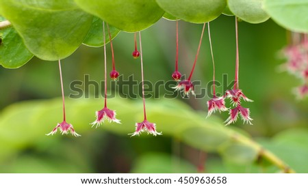 Tropical Little Leaf-flower - stock photo