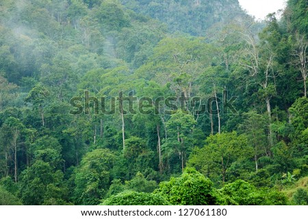Tropical lush rainforest landscape in Pangmapha, Thailand - stock photo