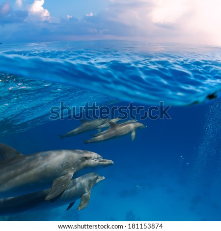 Tropical marine life cloudy postcard splitted by waterline. A family of dolphins with a baby swimming underwater underneath of sea surface