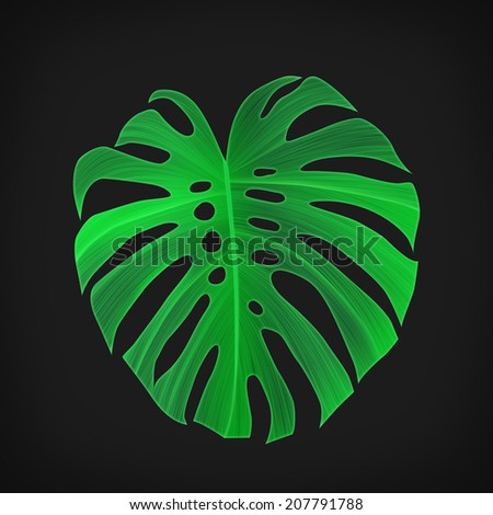 Tropical monstera leaf isolated on black. Californian style. Background in Hawaiian style - stock photo