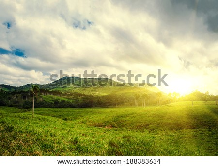 Tropical mountain forest, palm trees in sunlight. Sunset landscape in Dominican Republic. Nature of caribbean island